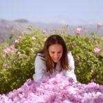Розы Диор будут собраны в Грассе несмотря на коронавирус